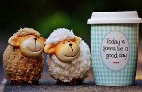 sheep-1644144__180