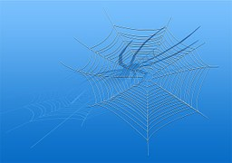 cobweb-123079__180